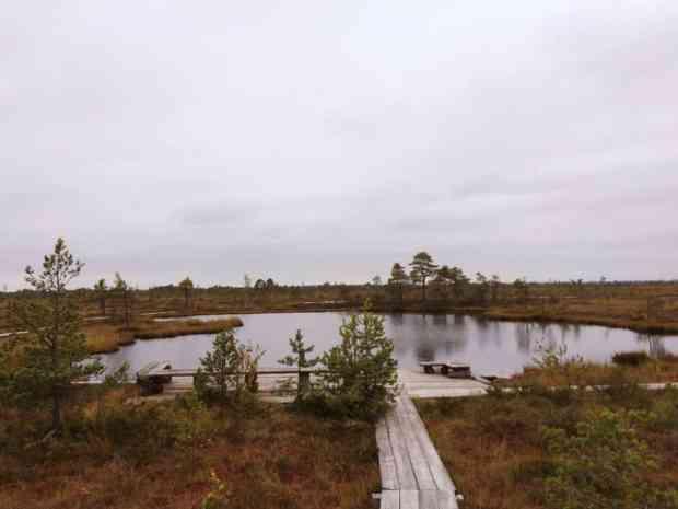 gogirlrun_estland_outdoor_moorschuhwanderung_soomaa-nationalpark_16