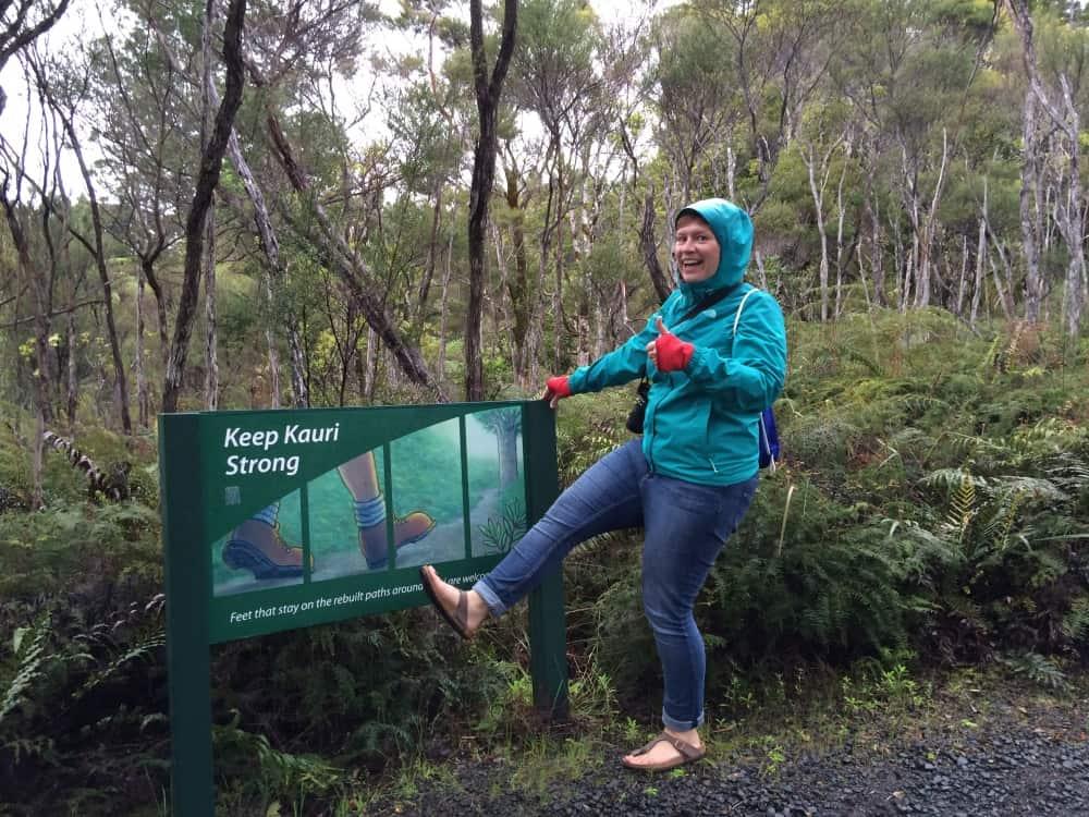 neuseeland-northland-kauri-tree-forest