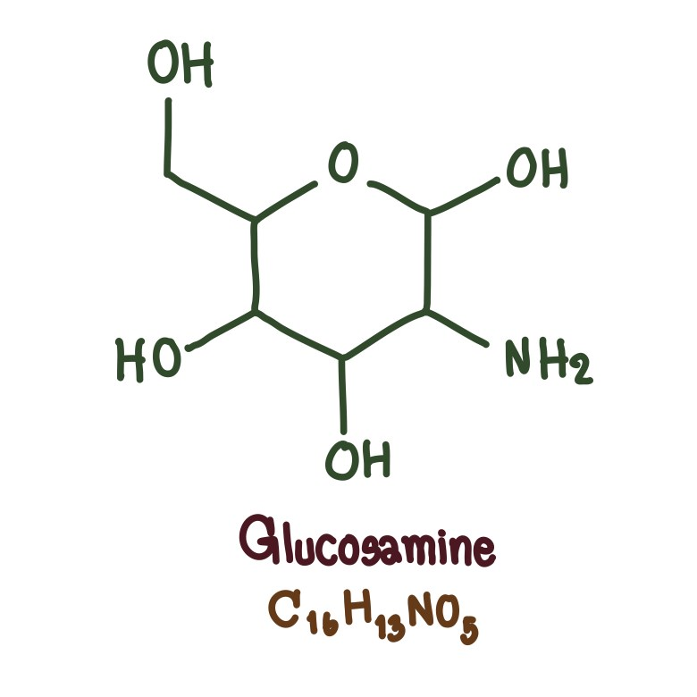 Chemical structure of glucosamine