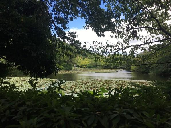Ryoan-ji's lake