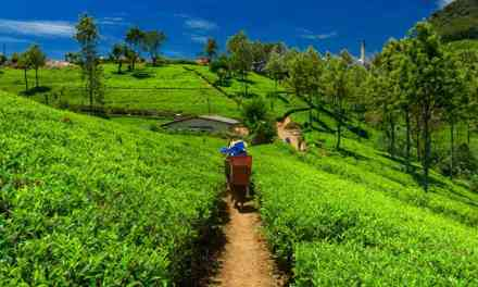 Assam – the unnoticed beauty of India