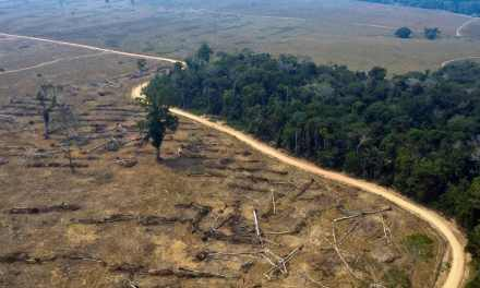 Amazon climate change risk, from forest to savanna