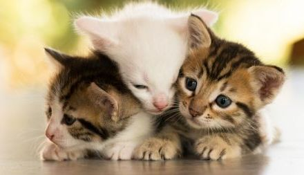 The Purr-fect Family – Three fur babies and mamma