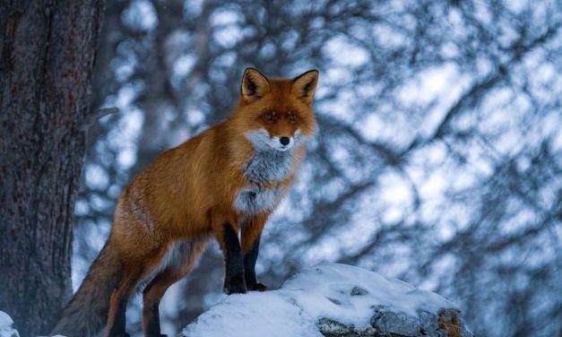 WILDLIFE PHOTOGRAPHY – @solgaard.photos