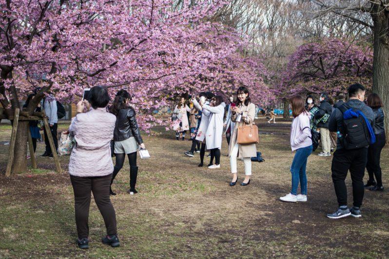 Giapponesi fanno le foto ai fiori di ciliegio