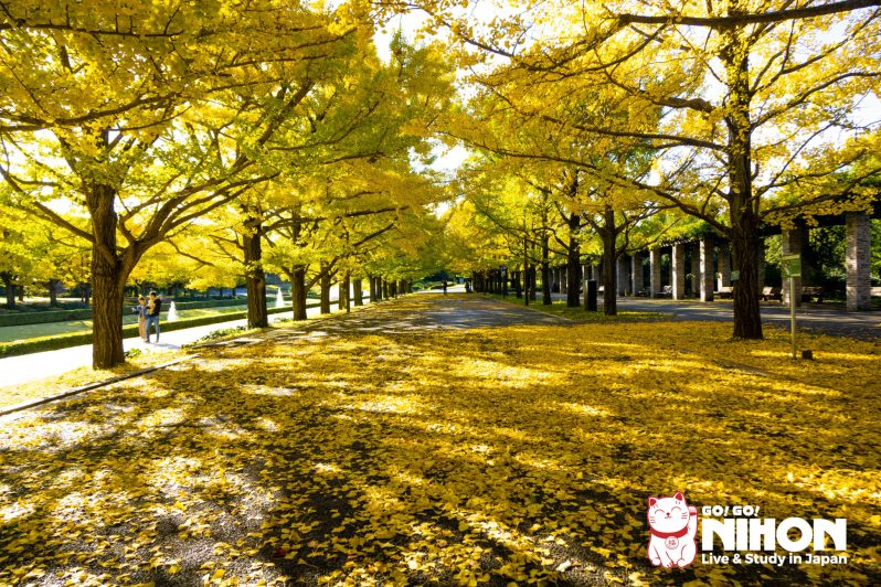 Showa Kinen Park Herbst in Japan