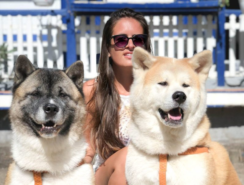 Resultado de imagen para american akita and owner