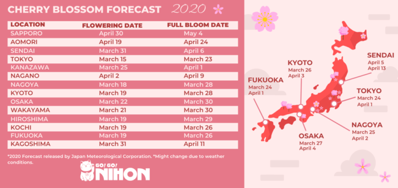 Updated 2020 cherry blossom forecast