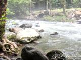 Smoky Mountains Pigeon River Tennessee Rocky, Foggy Creek