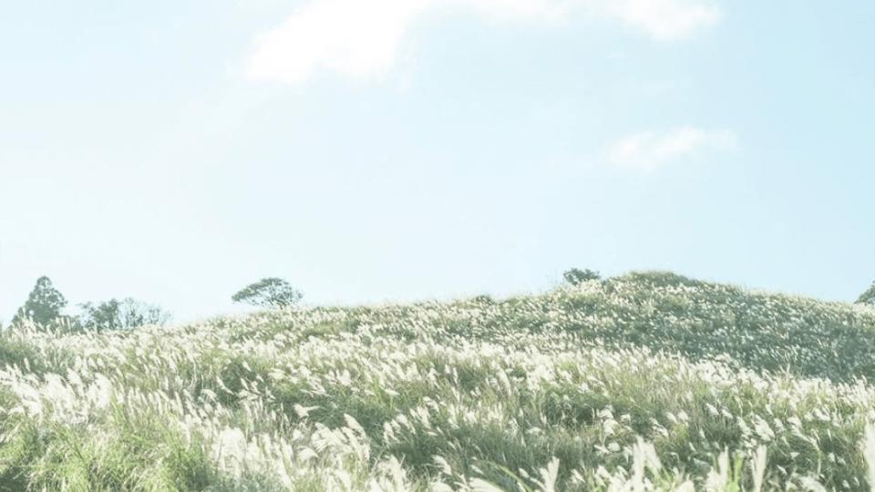 陽明山,陽明山花季,擎天崗