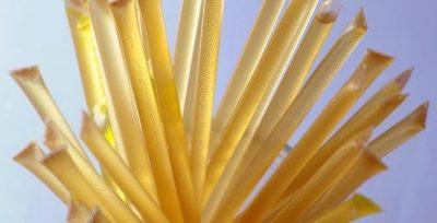 CBD Sour Blue Raspberry Honey Sticks Infused CBD 10mg (100 Pack)
