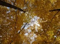 Golden Autumn, Moscow