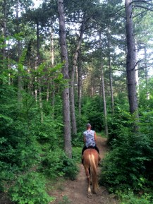 Pine forest, horseback riding in Crimea