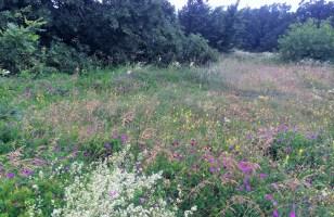 Wildflower meadows of Crimea