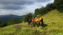 1 Horses and horizons, Sudak, Crimea 2 - Copy