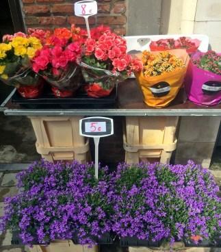 Flower shop in Antwerp