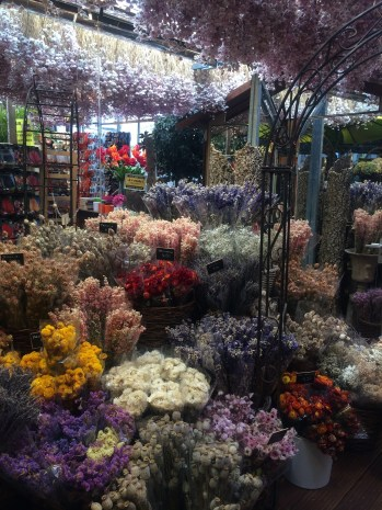 Amsterdam flower market - the dried variety