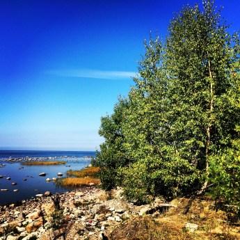 Baltic Sea coast 2