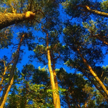 Estonian Forest 4