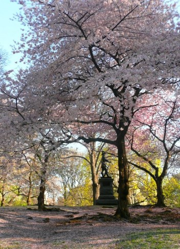 Spring in Central Park NYC 15