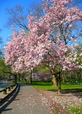 Spring in Central Park NYC 8