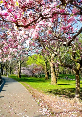 Spring in Central Park NYC 9