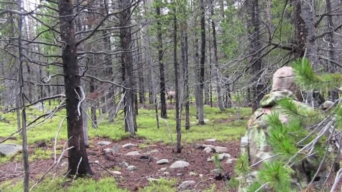 Moose hunting strategies of the early season