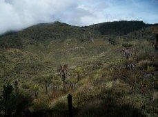 Prestine Vegetation at the Boarder of Kosipe and Sopu - Goilala (105)