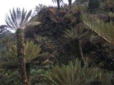 Prestine Vegetation at the Boarder of Kosipe and Sopu - Goilala (119)