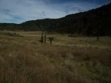 Prestine Vegetation at the Boarder of Kosipe and Sopu - Goilala (65)