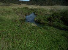 Prestine Vegetation at the Boarder of Kosipe and Sopu - Goilala (72)