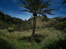Prestine Vegetation at the Boarder of Kosipe and Sopu - Goilala (83)