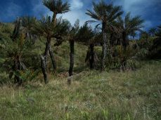 Prestine Vegetation at the Boarder of Kosipe and Sopu - Goilala (89)