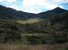 Prestine Vegetation at the Boarder of Kosipe and Sopu - Goilala (90)