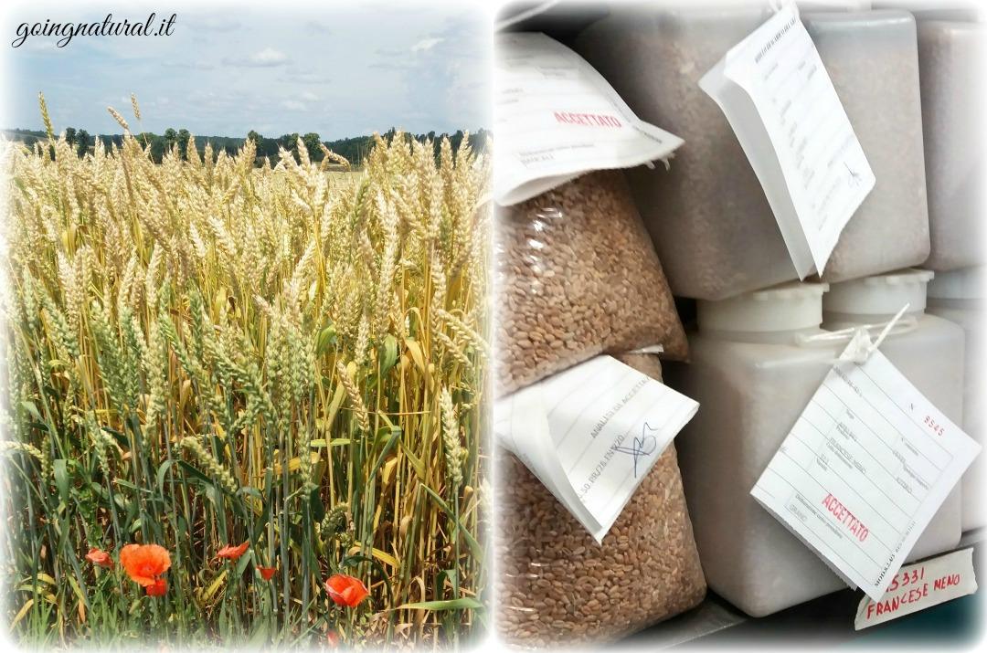 molini nova grano