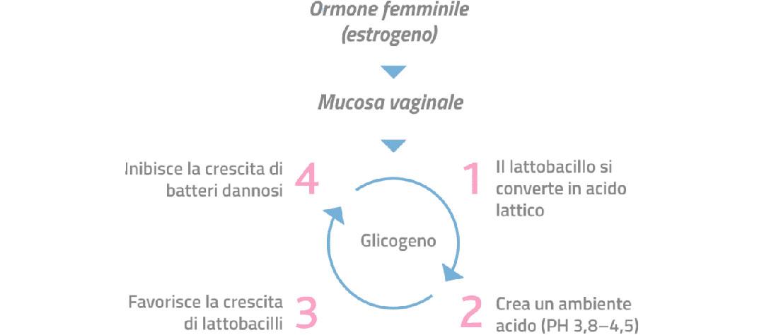 meccanismo ph vaginale