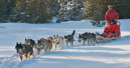 Going Nowhere Queerly-Wyoming Dog Sled Adventures