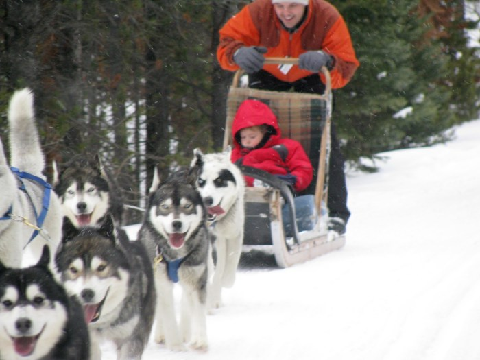 Ski.com can help you choose and get the best deals at 120 different resorts, like Breckenridge, one of the top trending resorts this season, and book special events, such as dog-sledding (photo by Eric Leiberman/Travel Features Syndicate)