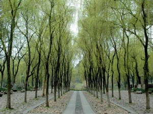 An archway of graceful willow trees leads to the statue of Qian, the first king of Wu © 2016 Karen Rubin/goingplacesfarandnear.com