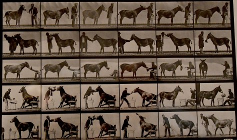 """Eadweard Muybridge's breakthrough photo, """"The Horse in Motion,"""" from 1878 is on view at the Nassau County Museum of Art © 2016 Karen Rubin/goingplacesfarandnear.com"""