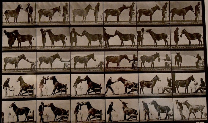 "Eadweard Muybridge's breakthrough photo, ""The Horse in Motion,"" from 1878 is on view at the Nassau County Museum of Art © 2016 Karen Rubin/goingplacesfarandnear.com"