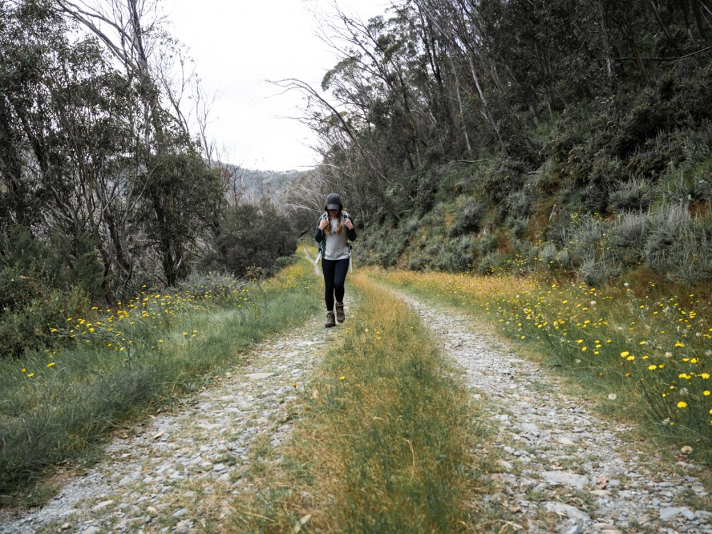 Trail to Silver Brumby