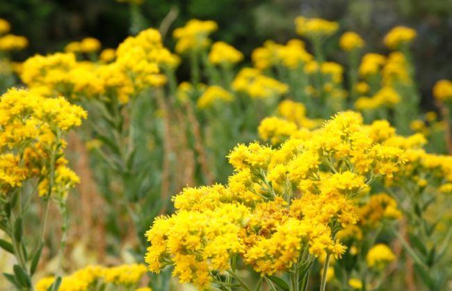 natural shades of yellow