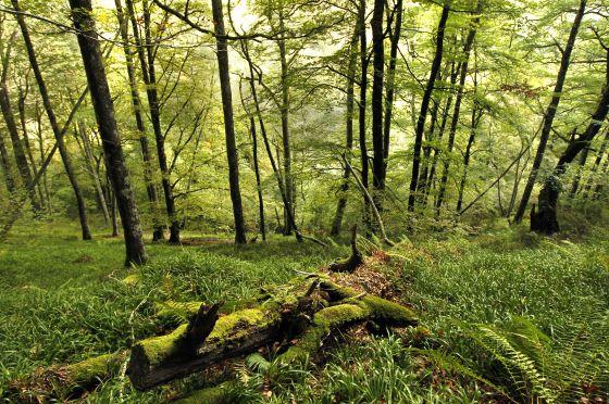 gambar ekosistem hutan hujan tropis
