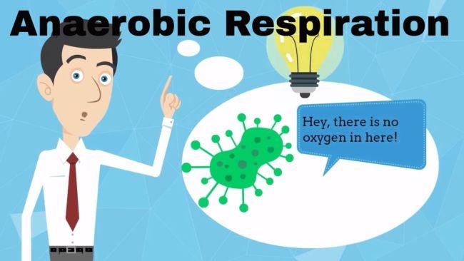 persamaan dan perbedaan respirasi aerob dan anaerob