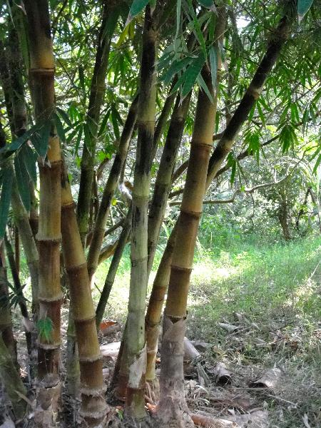 Really pretty bamboo