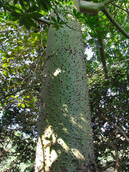 My favorite - I love the spiny trunk