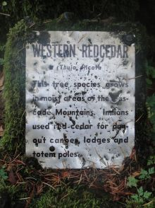 Placard about Western Red Cedars