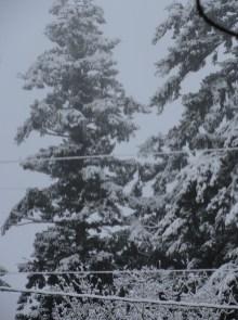 March 22 - Snow