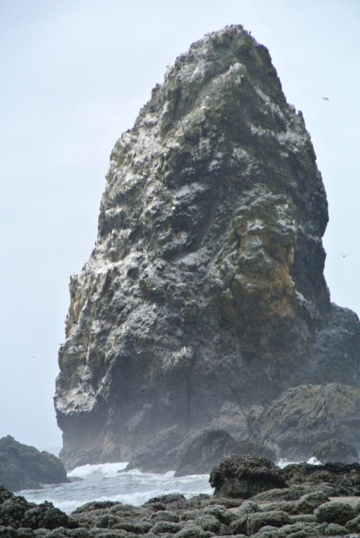 close up of one of the needles